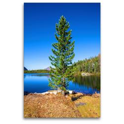 Premium Textil-Leinwand 80 x 120 cm Hoch-Format Schöne Bäume in Hochformat | Wandbild, HD-Bild auf Keilrahmen, Fertigbild auf hochwertigem Vlies, Leinwanddruck von Christa Kramer