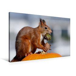 Premium Textil-Leinwand 90 cm x 60 cm quer, Das Halloween-Hörnchen | Wandbild, Bild auf Keilrahmen, Fertigbild auf echter Leinwand, Leinwanddruck von CALVENDO