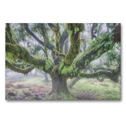 Premium Textil-Leinwand 90 x 60 cm Quer-Format Alter Lorbeerbaum im Nebel | Wandbild, HD-Bild auf Keilrahmen, Fertigbild auf hochwertigem Vlies, Leinwanddruck von Juergen Schonnop