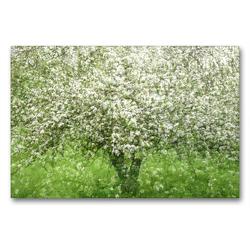 Premium Textil-Leinwand 90 x 60 cm Quer-Format Apfelbaum | Wandbild, HD-Bild auf Keilrahmen, Fertigbild auf hochwertigem Vlies, Leinwanddruck von Franziska Lenferink