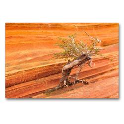Premium Textil-Leinwand 90 x 60 cm Quer-Format Bäume in der Welt, the Wave Arizona | Wandbild, HD-Bild auf Keilrahmen, Fertigbild auf hochwertigem Vlies, Leinwanddruck von Björn Alicke
