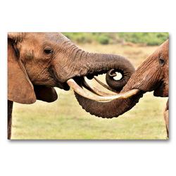 Premium Textil-Leinwand 90 x 60 cm Quer-Format Begrüßung zweier Elefanten | Wandbild, HD-Bild auf Keilrahmen, Fertigbild auf hochwertigem Vlies, Leinwanddruck von Jürgen Feuerer
