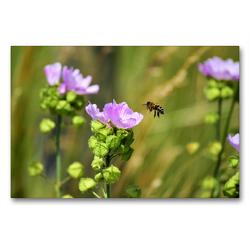 Premium Textil-Leinwand 90 x 60 cm Quer-Format Biene im Anflug | Wandbild, HD-Bild auf Keilrahmen, Fertigbild auf hochwertigem Vlies, Leinwanddruck von Marlise Gaudig