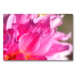 Premium Textil-Leinwand 90 x 60 cm Quer-Format Blütenmakro | Wandbild, HD-Bild auf Keilrahmen, Fertigbild auf hochwertigem Vlies, Leinwanddruck von Thomas Jäger