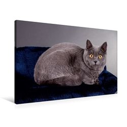 Premium Textil-Leinwand 90 x 60 cm Quer-Format Britisch Kurzhaar Katzen   Wandbild, HD-Bild auf Keilrahmen, Fertigbild auf hochwertigem Vlies, Leinwanddruck von Gabriela Wejat-Zaretzke von Wejat-Zaretzke,  Gabriela