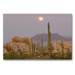 Premium Textil-Leinwand 90 x 60 cm Quer-Format Cardon and Cirio Cactus with Boulder Rocks near Catavinia, Baja California, Mexico   Wandbild, HD-Bild auf Keilrahmen, Fertigbild auf hochwertigem Vlies, Leinwanddruck von Christian Heeb