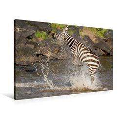 Premium Textil-Leinwand 90 x 60 cm Quer-Format Das Zebra rettet sich nach einer Krokodilattacke | Wandbild, HD-Bild auf Keilrahmen, Fertigbild auf hochwertigem Vlies, Leinwanddruck von Ingo Gerlach