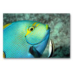 Premium Textil-Leinwand 90 x 60 cm Quer-Format Der Augenfleck-Doktorfisch lässt sich gerne putzen! | Wandbild, HD-Bild auf Keilrahmen, Fertigbild auf hochwertigem Vlies, Leinwanddruck von Ute Niemann