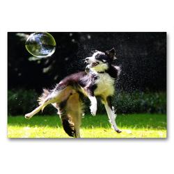 Premium Textil-Leinwand 90 x 60 cm Quer-Format dogs bubble | Wandbild, HD-Bild auf Keilrahmen, Fertigbild auf hochwertigem Vlies, Leinwanddruck von boris robert