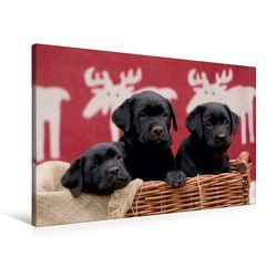 Premium Textil-Leinwand 90 x 60 cm Quer-Format Drei schwarze Labrador Welpen | Wandbild, HD-Bild auf Keilrahmen, Fertigbild auf hochwertigem Vlies, Leinwanddruck von Peter Faber von Faber,  Peter