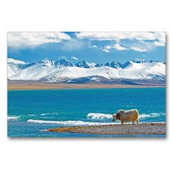 Premium Textil-Leinwand 90 x 60 cm Quer-Format Ein einsames Yak steht am idyllischen Nam Co See vor schneebedeckter Gebirgskette | Wandbild, HD-Bild auf Keilrahmen, Fertigbild auf hochwertigem Vlies, Leinwanddruck von CALVENDO