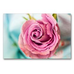 Premium Textil-Leinwand 90 x 60 cm Quer-Format Eine bezaubernde Rose   Wandbild, HD-Bild auf Keilrahmen, Fertigbild auf hochwertigem Vlies, Leinwanddruck von Rose Hurley