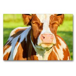 Premium Textil-Leinwand 90 x 60 cm Quer-Format Eine hübsche Kuh kann die Sonne genießen | Wandbild, HD-Bild auf Keilrahmen, Fertigbild auf hochwertigem Vlies, Leinwanddruck von Rose Hurley
