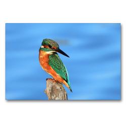 Premium Textil-Leinwand 90 x 60 cm Quer-Format Eisvogel | Wandbild, HD-Bild auf Keilrahmen, Fertigbild auf hochwertigem Vlies, Leinwanddruck von René Schaack