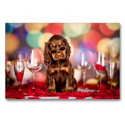 Premium Textil-Leinwand 90 x 60 cm Quer-Format Elvis mit 7,5 Wochen   Wandbild, HD-Bild auf Keilrahmen, Fertigbild auf hochwertigem Vlies, Leinwanddruck von Sabrina Wobith Photography – FotosVonMaja