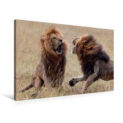 Premium Textil-Leinwand 90 x 60 cm Quer-Format Emotionale Momente: Löwenkampf & Löwenliebe / CH-Version | Wandbild, HD-Bild auf Keilrahmen, Fertigbild auf hochwertigem Vlies, Leinwanddruck von Ingo Gerlach GDT von Gerlach GDT,  Ingo