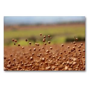 Premium Textil-Leinwand 90 x 60 cm Quer-Format Flachs | Wandbild, HD-Bild auf Keilrahmen, Fertigbild auf hochwertigem Vlies, Leinwanddruck von Flori0