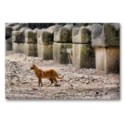 Premium Textil-Leinwand 90 x 60 cm Quer-Format Friedhofskatze | Wandbild, HD-Bild auf Keilrahmen, Fertigbild auf hochwertigem Vlies, Leinwanddruck von Thomas Bartruff