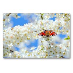 Premium Textil-Leinwand 90 x 60 cm Quer-Format Frühlingsgefühle   Wandbild, HD-Bild auf Keilrahmen, Fertigbild auf hochwertigem Vlies, Leinwanddruck von GUGIGEI