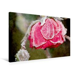 Premium Textil-Leinwand 90 x 60 cm Quer-Format Gefrostete Rose   Wandbild, HD-Bild auf Keilrahmen, Fertigbild auf hochwertigem Vlies, Leinwanddruck von Heike Hultsch von Hultsch,  Heike