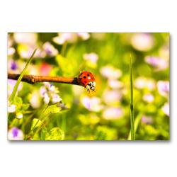 Premium Textil-Leinwand 90 x 60 cm Quer-Format Gefühle eines Sommertages | Wandbild, HD-Bild auf Keilrahmen, Fertigbild auf hochwertigem Vlies, Leinwanddruck von Bettina Hackstein