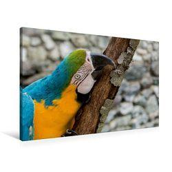 Premium Textil-Leinwand 90 x 60 cm Quer-Format Gelbbrustara   Wandbild, HD-Bild auf Keilrahmen, Fertigbild auf hochwertigem Vlies, Leinwanddruck von Angelika Beuck von Beuck,  Angelika