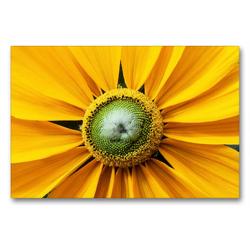 Premium Textil-Leinwand 90 x 60 cm Quer-Format Gelber Sonnenhut | Wandbild, HD-Bild auf Keilrahmen, Fertigbild auf hochwertigem Vlies, Leinwanddruck von Xenia Schlossherr