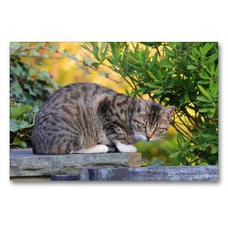 Premium Textil-Leinwand 90 x 60 cm Quer-Format Getigerte Katze | Wandbild, HD-Bild auf Keilrahmen, Fertigbild auf hochwertigem Vlies, Leinwanddruck von Sabine Löwer