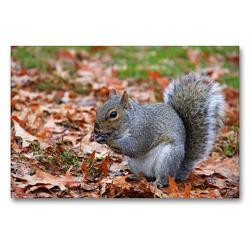 Premium Textil-Leinwand 90 x 60 cm Quer-Format Grauhörnchen im Central Park New York (USA)   Wandbild, HD-Bild auf Keilrahmen, Fertigbild auf hochwertigem Vlies, Leinwanddruck von Jana Thiem-Eberitsch