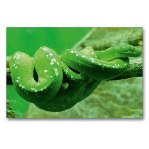 Premium Textil-Leinwand 90 x 60 cm Quer-Format Grüne Baumpython (Morelia viridis) | Wandbild, HD-Bild auf Keilrahmen, Fertigbild auf hochwertigem Vlies, Leinwanddruck von kattobello