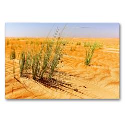Premium Textil-Leinwand 90 x 60 cm Quer-Format Grüne Gräser der Wüste | Wandbild, HD-Bild auf Keilrahmen, Fertigbild auf hochwertigem Vlies, Leinwanddruck von Jürgen Feuerer