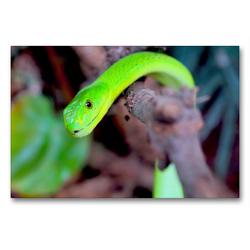 Premium Textil-Leinwand 90 x 60 cm Quer-Format Grüne Mamba | Wandbild, HD-Bild auf Keilrahmen, Fertigbild auf hochwertigem Vlies, Leinwanddruck von Rose Hurley