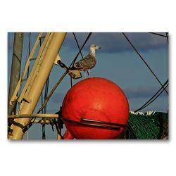 Premium Textil-Leinwand 90 x 60 cm Quer-Format Hafenbewohner   Wandbild, HD-Bild auf Keilrahmen, Fertigbild auf hochwertigem Vlies, Leinwanddruck von Norbert J. Sülzner / NJS-Photographie
