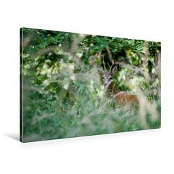 Premium Textil-Leinwand 90 x 60 cm Quer-Format Heimlicher Rehbock | Wandbild, HD-Bild auf Keilrahmen, Fertigbild auf hochwertigem Vlies, Leinwanddruck von Ingo Gerlach