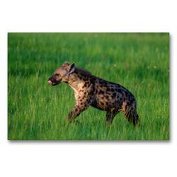 Premium Textil-Leinwand 90 x 60 cm Quer-Format Hyäne | Wandbild, HD-Bild auf Keilrahmen, Fertigbild auf hochwertigem Vlies, Leinwanddruck von Thorsten Jürs