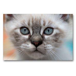 Premium Textil-Leinwand 90 x 60 cm Quer-Format Ich seh dich… | Wandbild, HD-Bild auf Keilrahmen, Fertigbild auf hochwertigem Vlies, Leinwanddruck von Christiane Calmbacher