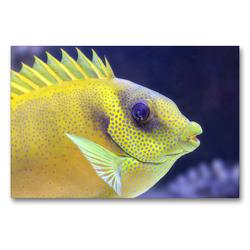 Premium Textil-Leinwand 90 x 60 cm Quer-Format Im Meeres-Aquarium | Wandbild, HD-Bild auf Keilrahmen, Fertigbild auf hochwertigem Vlies, Leinwanddruck von Rose Hurley