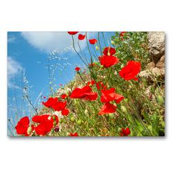 Premium Textil-Leinwand 90 x 60 cm Quer-Format Im Rausch des roten Mohns | Wandbild, HD-Bild auf Keilrahmen, Fertigbild auf hochwertigem Vlies, Leinwanddruck von Hilke Maunder (him)