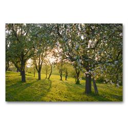 Premium Textil-Leinwand 90 x 60 cm Quer-Format In den Streuobstwiesen | Wandbild, HD-Bild auf Keilrahmen, Fertigbild auf hochwertigem Vlies, Leinwanddruck von GUGIGEI