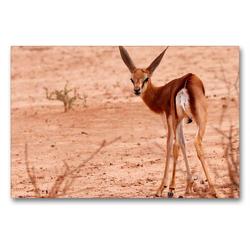 Premium Textil-Leinwand 90 x 60 cm Quer-Format Junges Impala in der Etosha Pfanne, Afrika | Wandbild, HD-Bild auf Keilrahmen, Fertigbild auf hochwertigem Vlies, Leinwanddruck von Birgit Scharnhorst