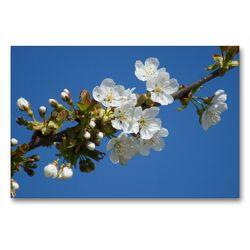Premium Textil-Leinwand 90 x 60 cm Quer-Format Kirschblüte | Wandbild, HD-Bild auf Keilrahmen, Fertigbild auf hochwertigem Vlies, Leinwanddruck von kattobello