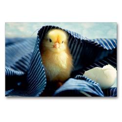 Premium Textil-Leinwand 90 x 60 cm Quer-Format Küken unter der blauen Decke | Wandbild, HD-Bild auf Keilrahmen, Fertigbild auf hochwertigem Vlies, Leinwanddruck von Tanja Riedel