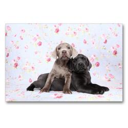 Premium Textil-Leinwand 90 x 60 cm Quer-Format Labrador Retriever Welpe / Labrador Retriever Puppy   Wandbild, HD-Bild auf Keilrahmen, Fertigbild auf hochwertigem Vlies, Leinwanddruck von Jeanette Hutfluss