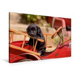 Premium Textil-Leinwand 90 x 60 cm Quer-Format Labrador Retriever Welpen | Wandbild, HD-Bild auf Keilrahmen, Fertigbild auf hochwertigem Vlies, Leinwanddruck von Peter Faber