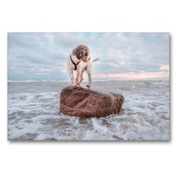 Premium Textil-Leinwand 90 x 60 cm Quer-Format Lagotto Romagnolo Freiheitsstatue an der Ostsee | Wandbild, HD-Bild auf Keilrahmen, Fertigbild auf hochwertigem Vlies, Leinwanddruck von Wuffclick-pic