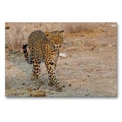 Premium Textil-Leinwand 90 x 60 cm Quer-Format Leopard | Wandbild, HD-Bild auf Keilrahmen, Fertigbild auf hochwertigem Vlies, Leinwanddruck von Wilfried Martin