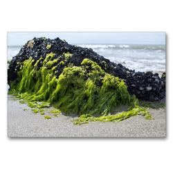 Premium Textil-Leinwand 90 x 60 cm Quer-Format Miesmuscheln am Strand bei Saintes-Maries-de-la-Mer | Wandbild, HD-Bild auf Keilrahmen, Fertigbild auf hochwertigem Vlies, Leinwanddruck von Martina Schikore