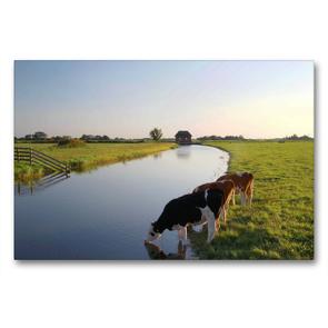 Premium Textil-Leinwand 90 x 60 cm Quer-Format Milchkühe beim Trinken   Wandbild, HD-Bild auf Keilrahmen, Fertigbild auf hochwertigem Vlies, Leinwanddruck von Steffani Lehmann
