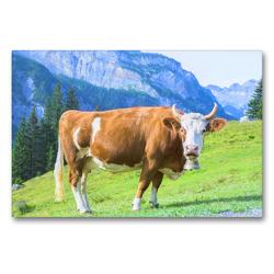 Premium Textil-Leinwand 90 x 60 cm Quer-Format Milchkuh mit Glocke auf der Alm | Wandbild, HD-Bild auf Keilrahmen, Fertigbild auf hochwertigem Vlies, Leinwanddruck von Rose Hurley