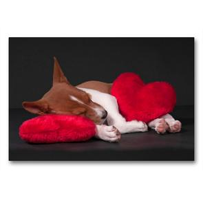 Premium Textil-Leinwand 90 x 60 cm Quer-Format Müde bin ich, geh' zur Ruh' | Wandbild, HD-Bild auf Keilrahmen, Fertigbild auf hochwertigem Vlies, Leinwanddruck von Angelika Joswig